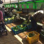 三浦の野菜直売所、春キャベツ100円でした