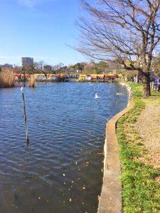 上野公園さくら3