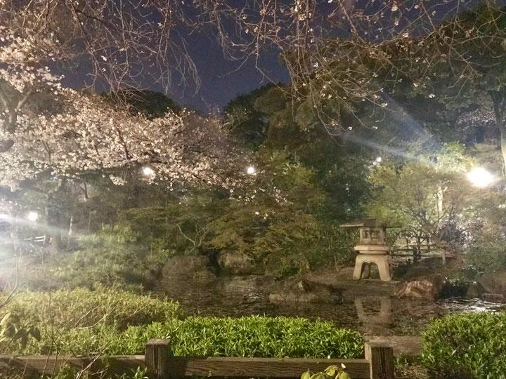 日本庭園と夜桜