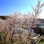 春には桜を眺められます