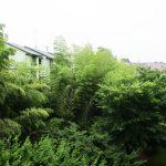 敷地内は緑豊かな環境です